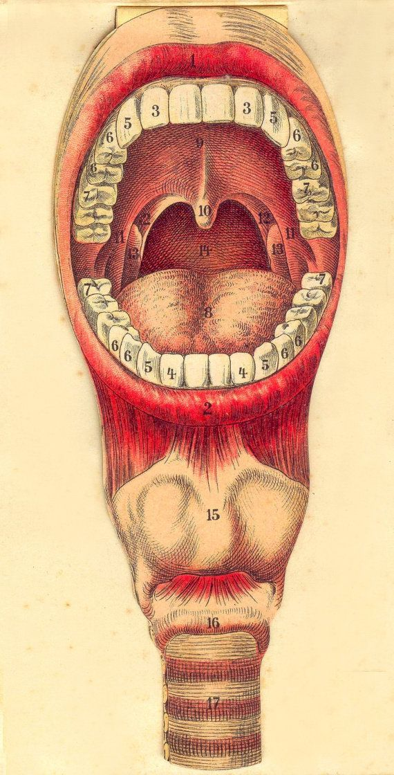 Dental mouth tongue print teeth anatomy by VintageBeautyMakeup ...