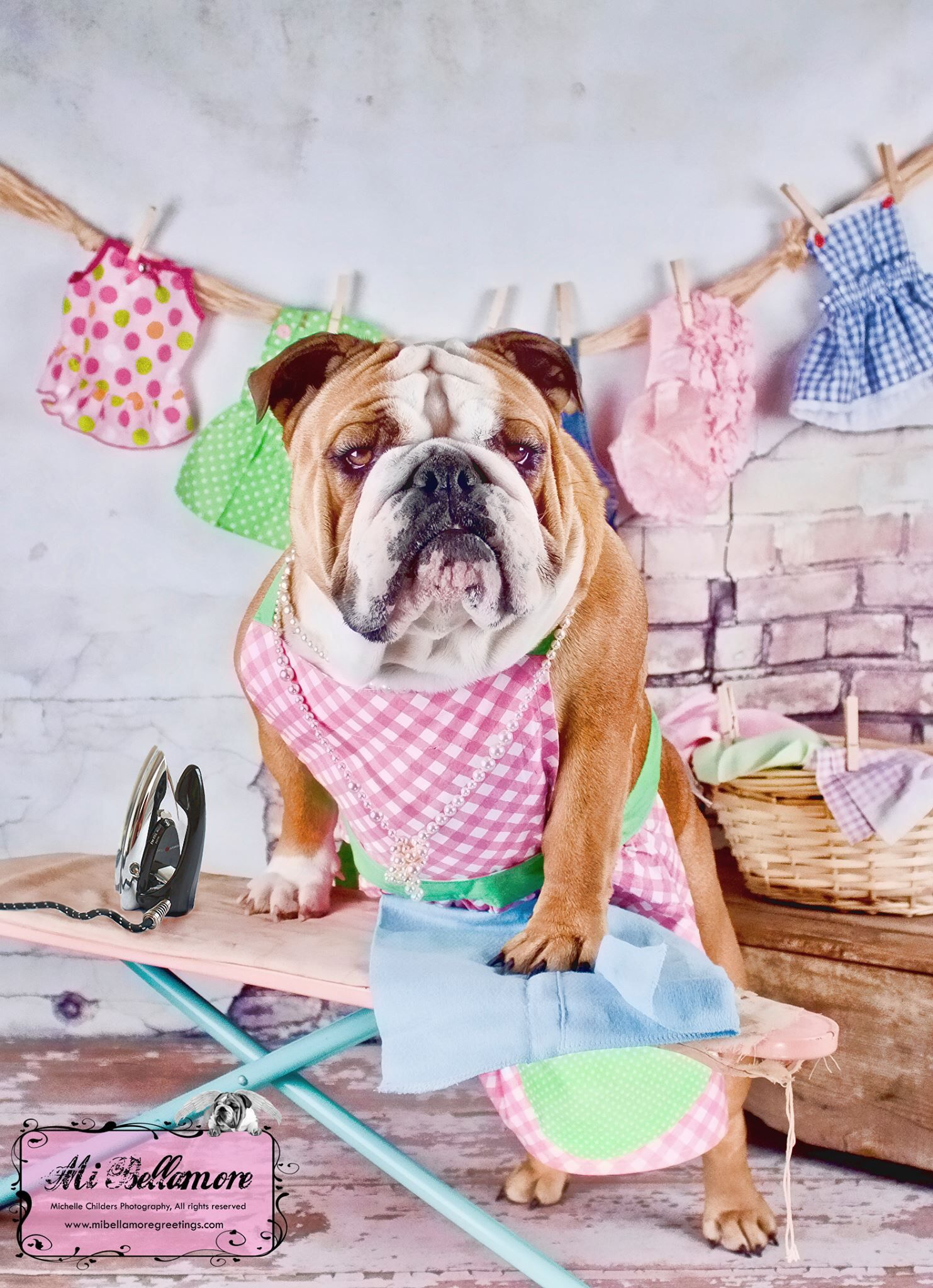 Ironing Bully All Things Bulldog Bulldog Puppies Old English Bulldog Silly Dogs
