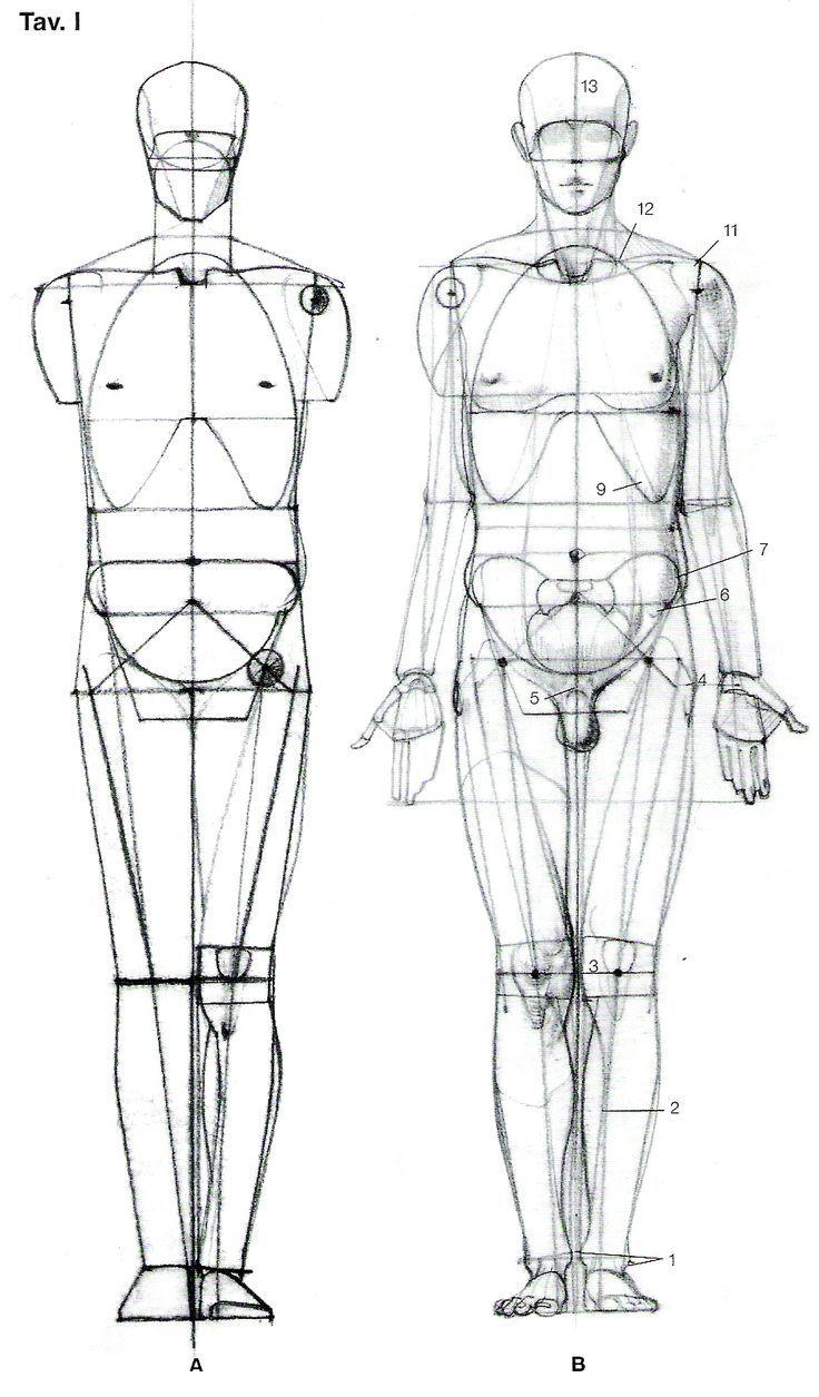 estudio anatomico | Anatomy | Pinterest | Zeichen, Skizzen und Akt