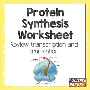 protein synthesis worksheet worksheets students and teaching ideas. Black Bedroom Furniture Sets. Home Design Ideas