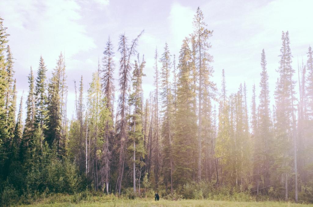 Adventure #79: 4000 Miles Project Part 2- Arctic Circle, Shot by Marlon Geller, Matt Lief Anderson, and Randy Martin #adventure79 #poler #polerstuff #campvibes