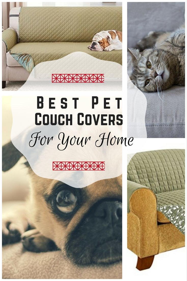 The Best Couch Covers and Sofa Shield for Homes with Dogs in ...