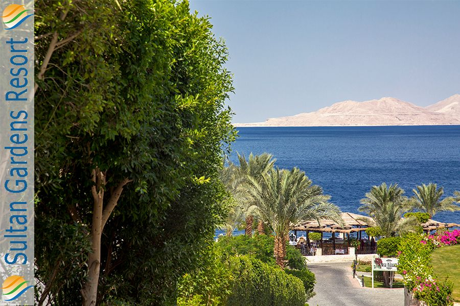 Greetings From The Sunny Sharm El Sheikh Wishing You All A Wonderful Month Of November Sultangarden Best All Inclusive Resorts Sharm El Sheikh Beach Resorts
