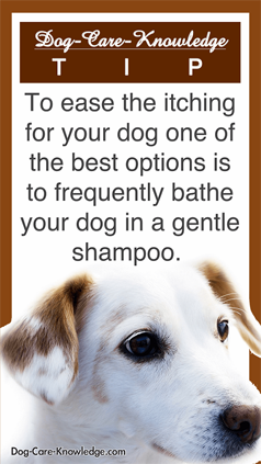 Dog Skin Allergies Try These Simple Remedies And Gentle Shampoos To Give Itch Relieve To Your Itchy Dog Dog Skin Itchy Dog Skin Dog Skin Care