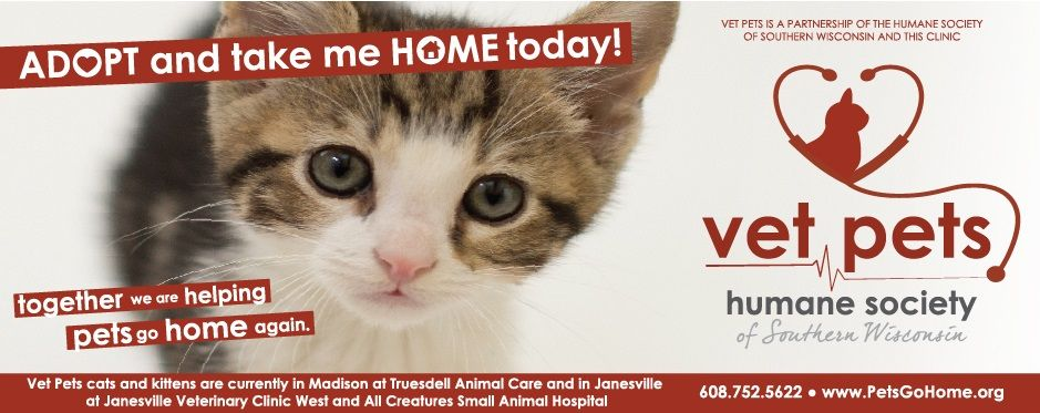 Feline Mom And Babies Are Fostered At Southern Wi Vet Clinics And