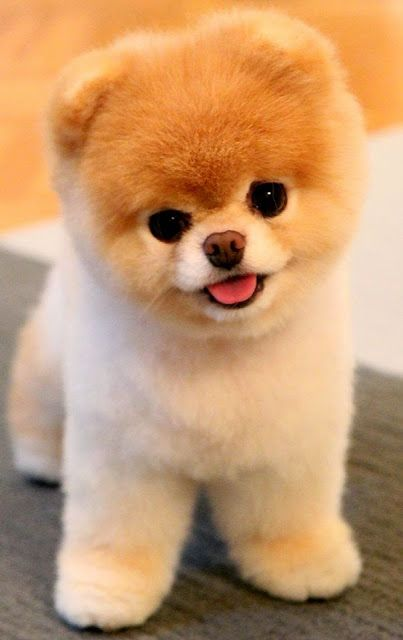5 Most Adorable Dogs Breed