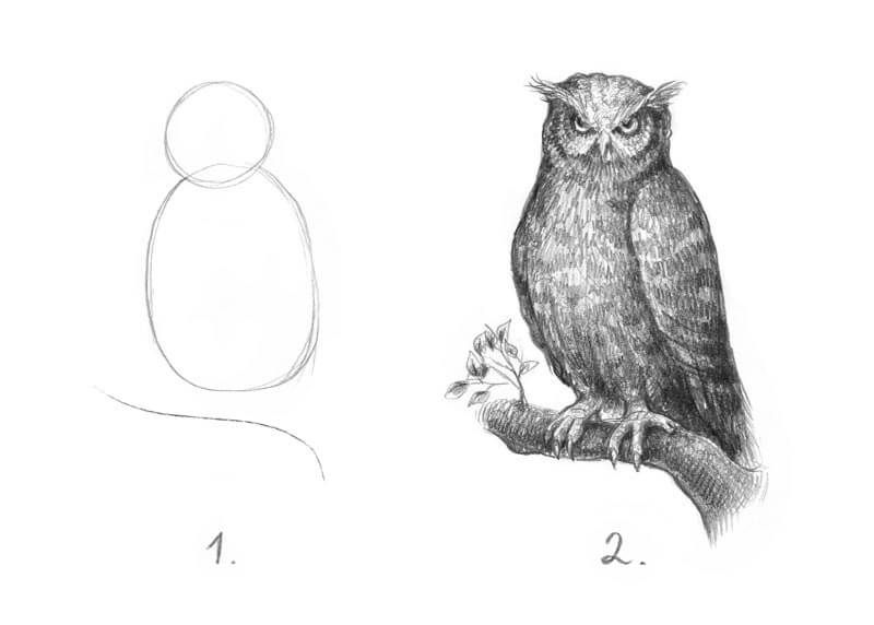 How To Draw An Owl Meme Step By Step Drawing Drawing Tutorial Owls Drawing