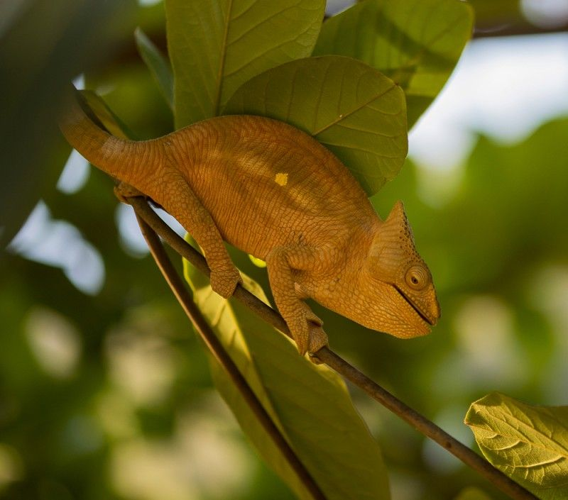 What My Chameleon Taught Me About Reptilecare