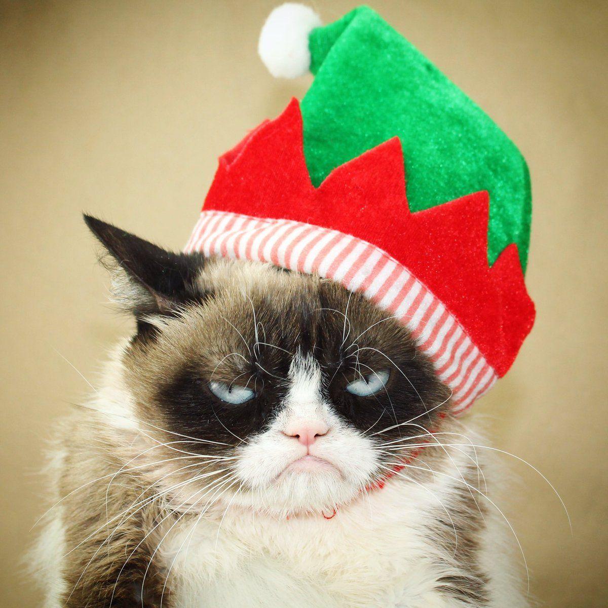 Grumpy Cat (RealGrumpyCat) Twitter GOOD OL GRUMPY