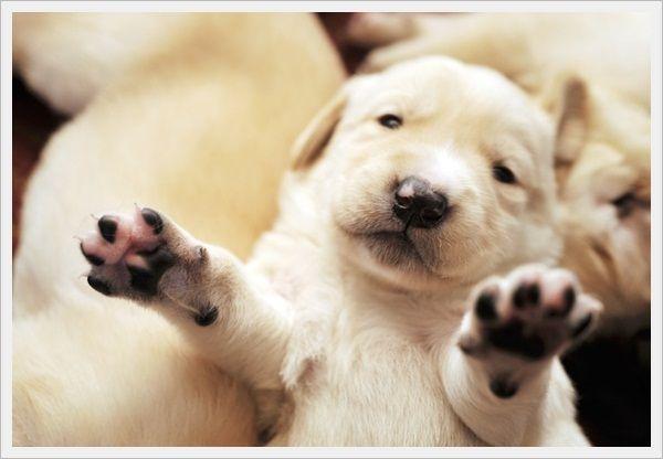 Pictures Of Cute Puppies 16 Jpg 600 416 Pixels Newborn Puppies