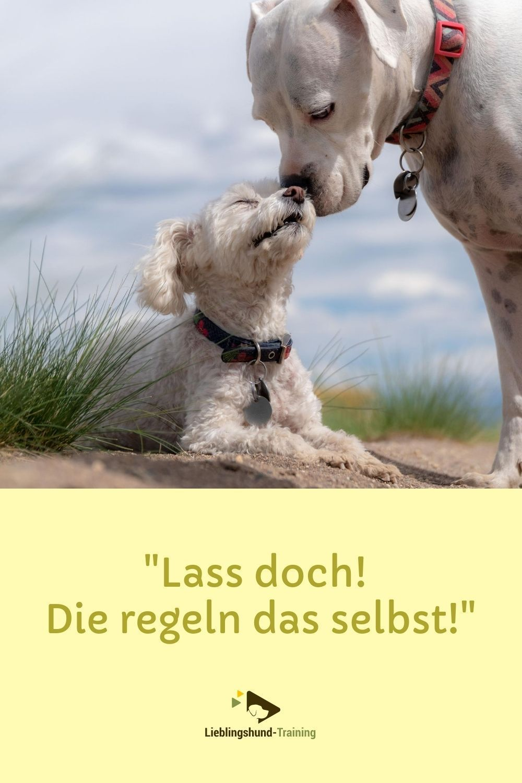 Konflikte unter Hunden kommen ständig vor. Es muss gar nicht das laute aufeinanderprallen sein - schon ein vorbeilaufen an engen Wegen kann für manche Hunde schwierig werden. Immer wieder wird dazu geraten, die Hunde solche Konflikte selbst zu lösen. Manchmal mag das funktionieren. Für die meisten Hunde ist das jedoch keine Option. Lies mehr darüber im Artikel.
