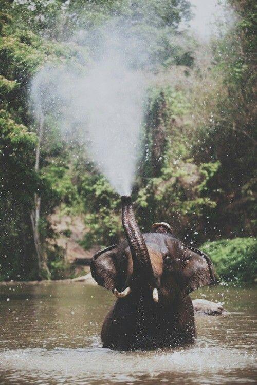 En el agua.
