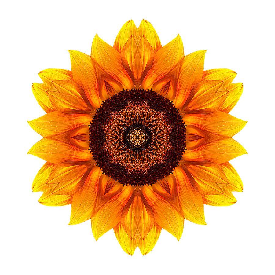 Yellow And Orange Sunflower Vi Flower Mandala White By David J Bookbinder In 2020 Flower Mandala Sunflower Mandala Tattoo Sunflower Mandala
