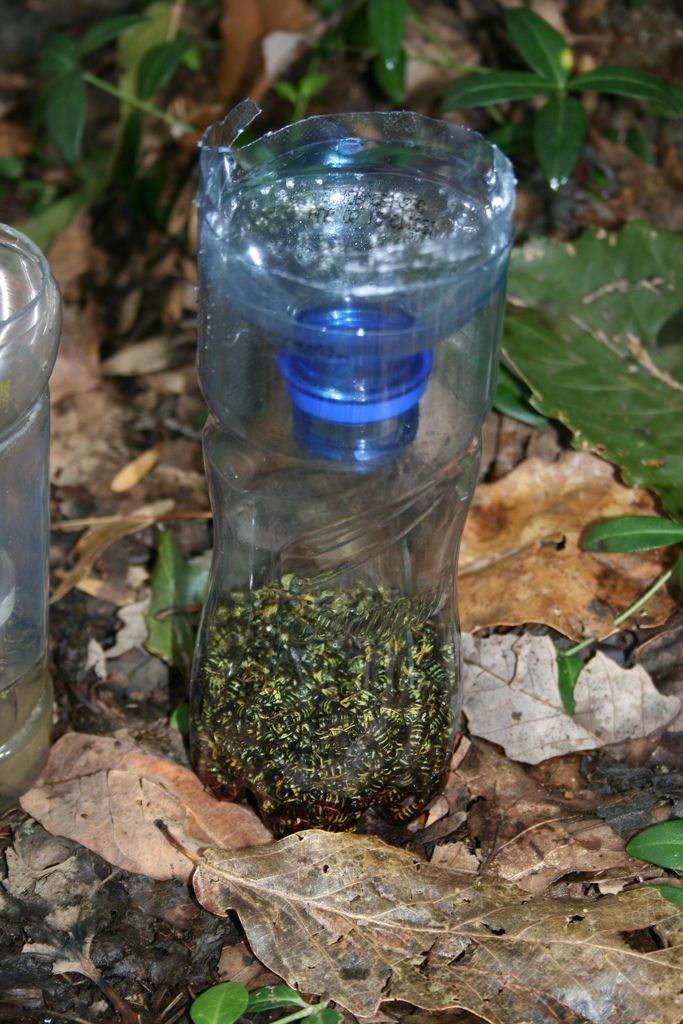 Diy Yellow Jacket Bottle Trap Wasp Traps