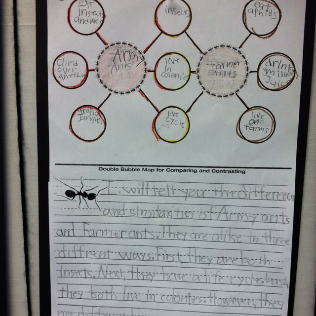 Double Bubble Map Compare And Contrast With Paragraph Writing Thinking Map Thinking Maps Common Core Reading
