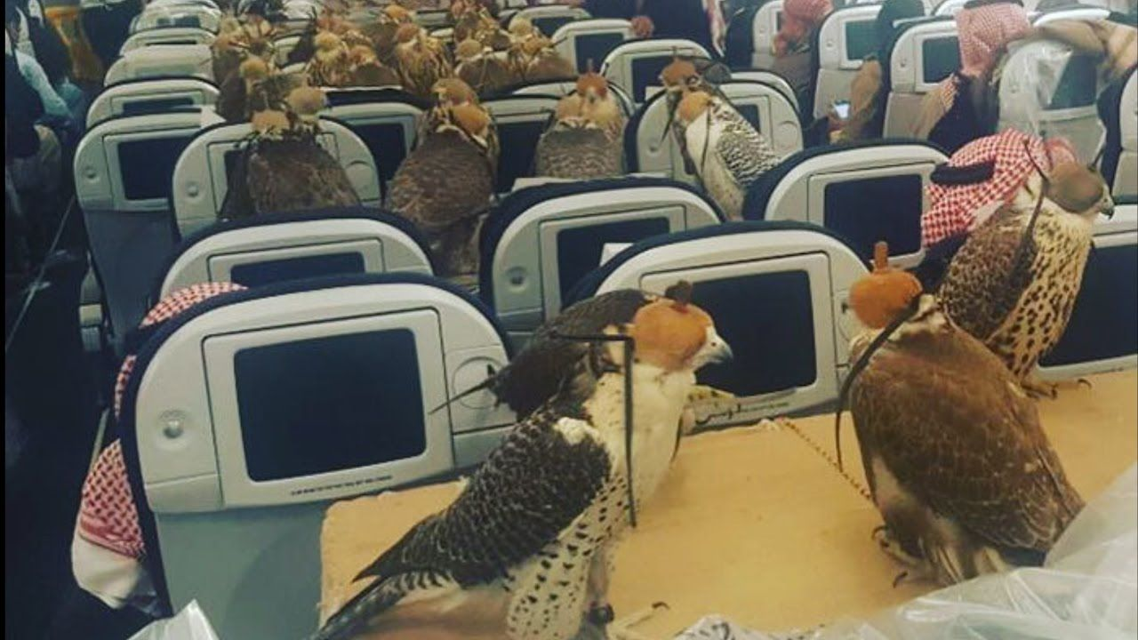 Prince Of Saudi Arabia Bought 80 Falcon Tickets Falcons Bizarre Photos Fear Of Flying