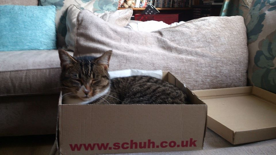 A shoe box = hours of fun for kitties. Cats, Me as a