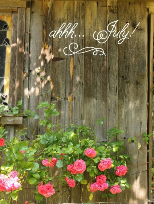 Pin by cynthia a on summertime pinterest july a wonderful beautiful month m4hsunfo Gallery