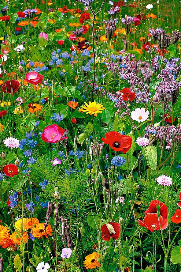 Easiest Way To Create A Border Of Wild Flowers With The U0027Wildflowers Mixu0027  You Can Create A Wild Flower Meadow In Your Garden.