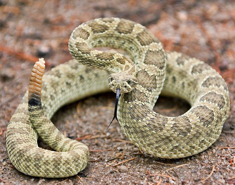 Похожее изображение Змея, Рептилии