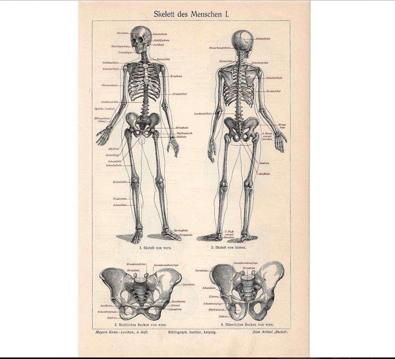 1894 squelette anatomie humaine originale anatomie antique ...