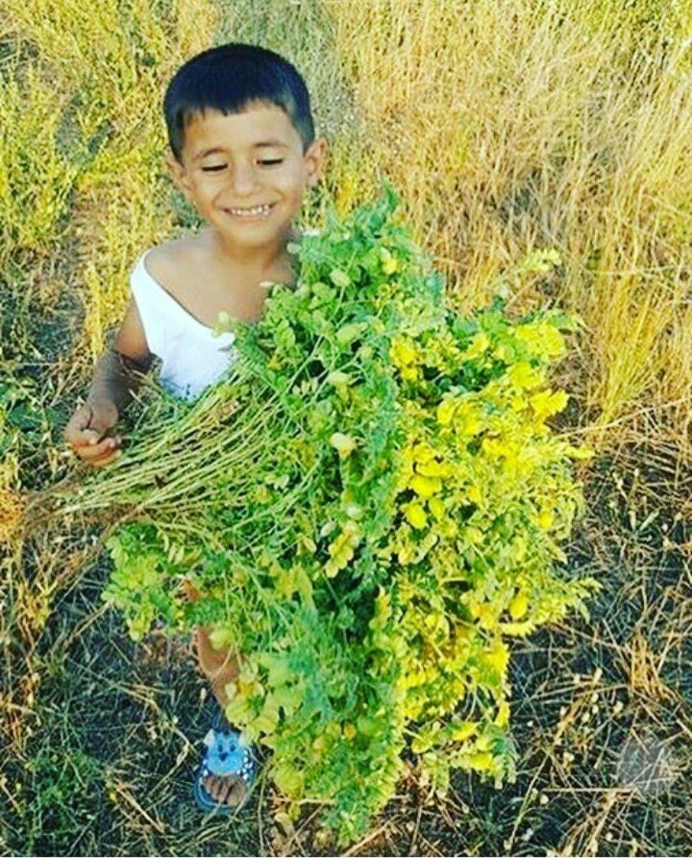 Pin by angela smith on kurdish food kurdish food herbs