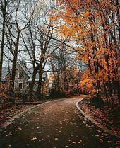 I Autumn I Roads I Leaves I Forests Me Forest I Nature Me Road I House I Cozy I See  I Autumn I Roads I Leaves I Forests Me Forest I Nature Me Road I House I Cozy I See