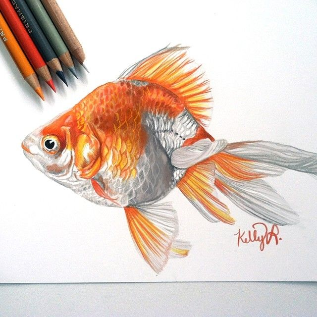 Having prints made up of my Goldie!!  ...along with some of my other artwork!!  Prints will be available on my website within the next week or so  Will keep you all posted! #goldfish #drawing #coloredpencil #prismacolor #art #laharstudios #prints