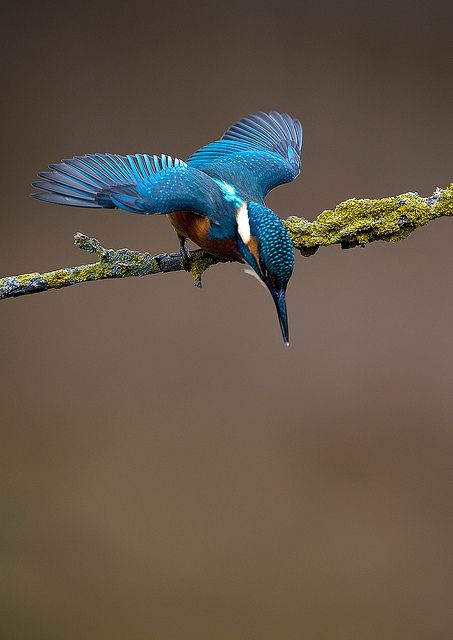 Kingfisher Kingfisher Beautiful Birds Pet Birds