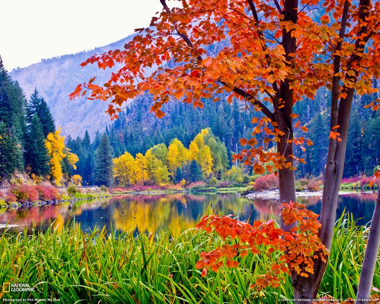 Fall Foliage Wallpapers For Desktop Wallpaper Cave Fall Wallpaper Beautiful Nature Nature Photos