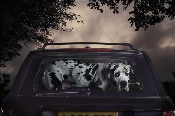 Aaaaawwww Poor Lil Guy Hundebilder Ausgestopftes Tier Hund Auto