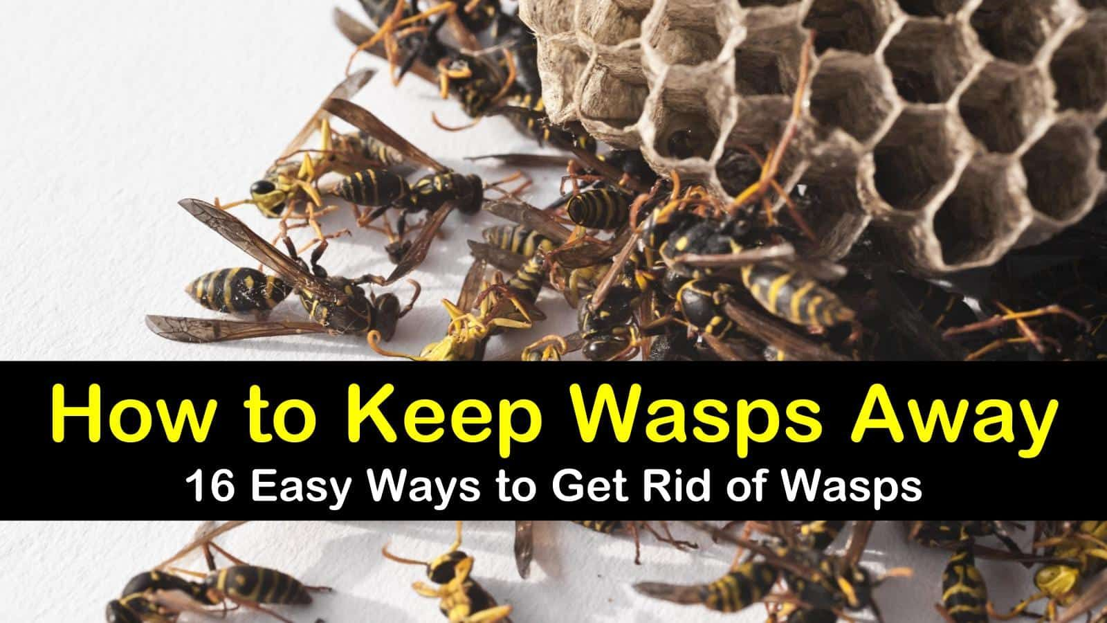 How to Keep Wasps Away 16 Ways to Get Rid of Wasps Get