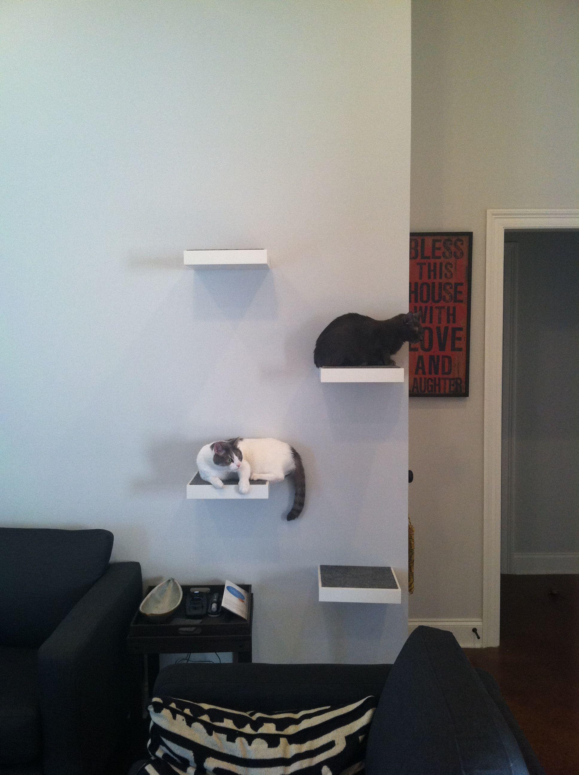 modern cat shelves cat tree used ikea floating shelves i bought rh pinterest com Cat Climbing Towers modern cat shelves uk