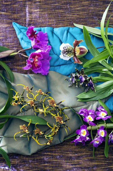 Surreale Blütenköpfe mit extra viel Eleganz – Edle Orchideen sind Zimmerpflanzen des Monats November | Blumenbüro