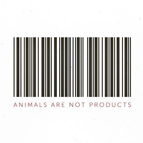 animals are not products✌🏾do you agree with this, why or why not?🌿 ————————————————————————