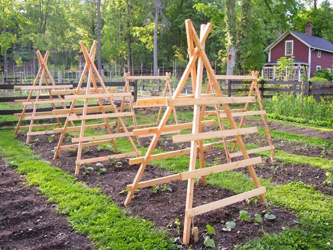 Squash, pumpkin and cucumber trellises ready to be climbed.... #ediblegarden Squash, pumpkin and cucumber trellises ready to be climbed.... #veggiegardens