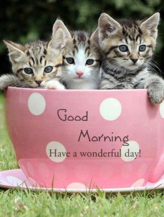 Good Morning Morning Cat Good Morning Cat Cute Good Morning