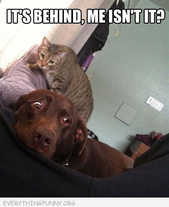 Funny Caption Cat Behind Scared Dog It S Behind Me Isn T It Funny