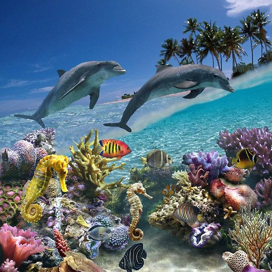 Coral Reef And Dolphins