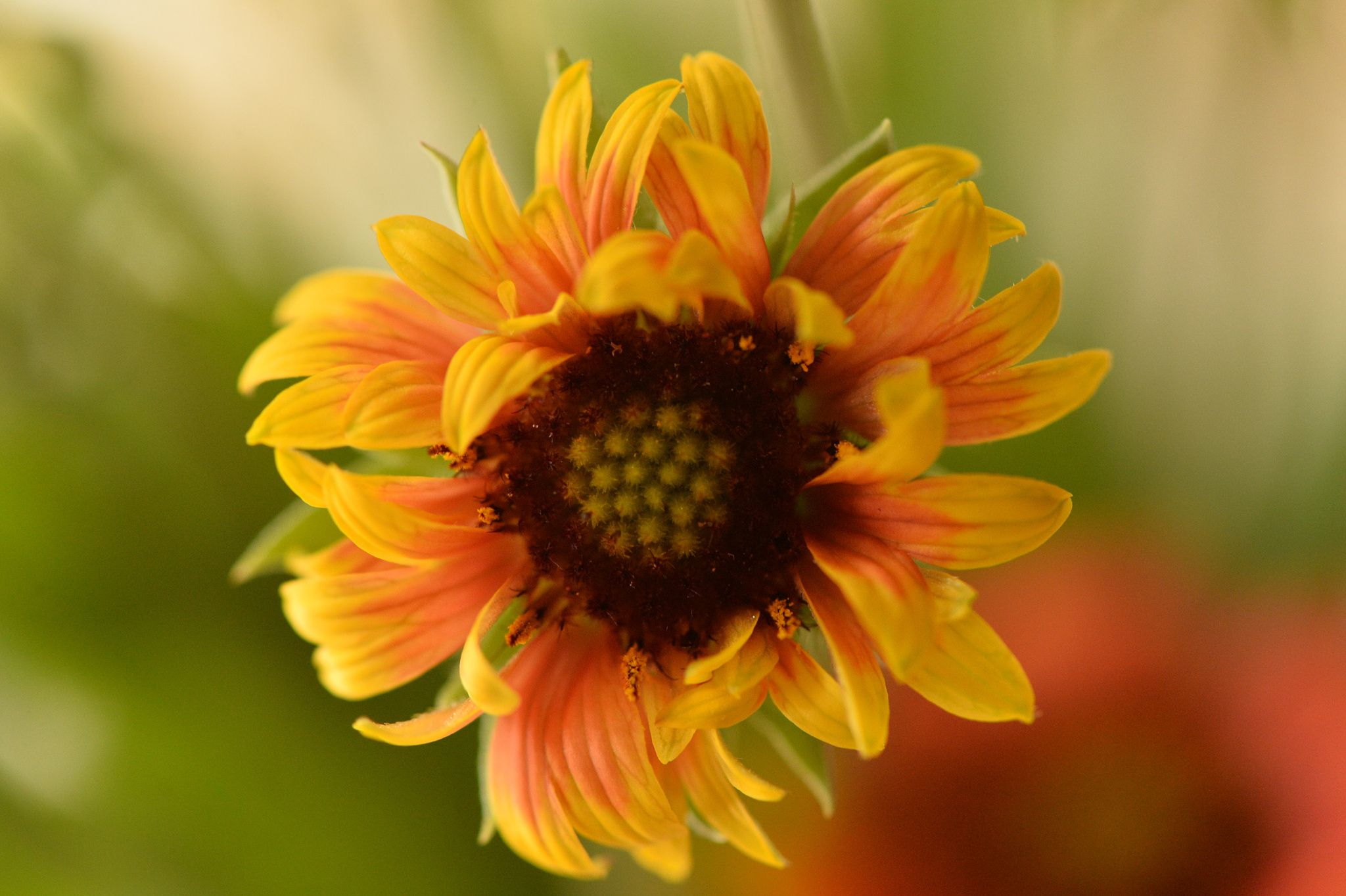Stylish flower by yayoi vejo flores em você pinterest stylish