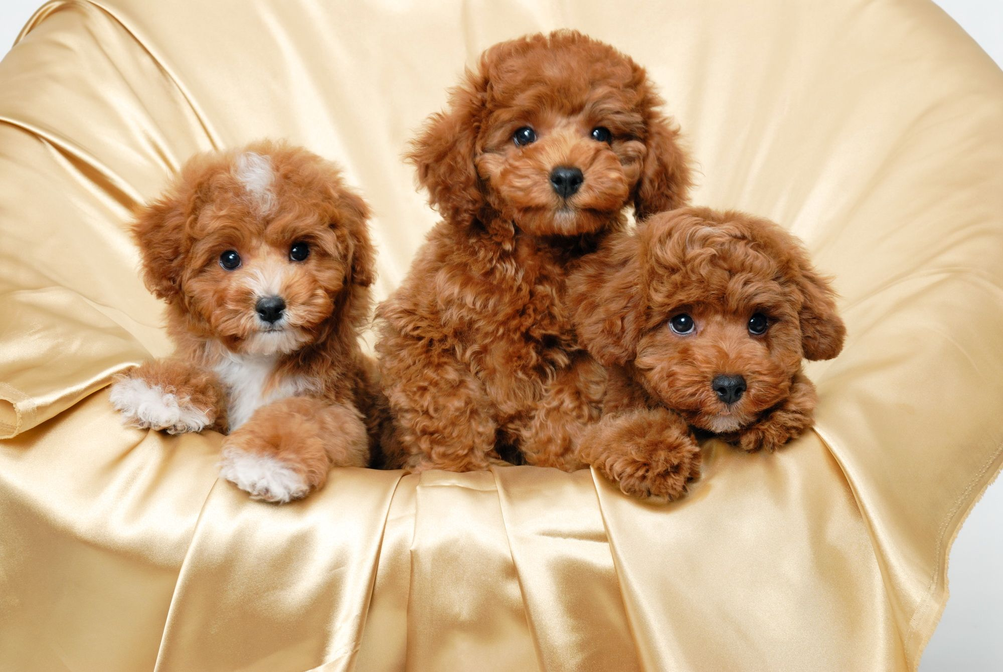 Hd Cute Puppies Wallpaper Download Free 104897 Cute Puppy