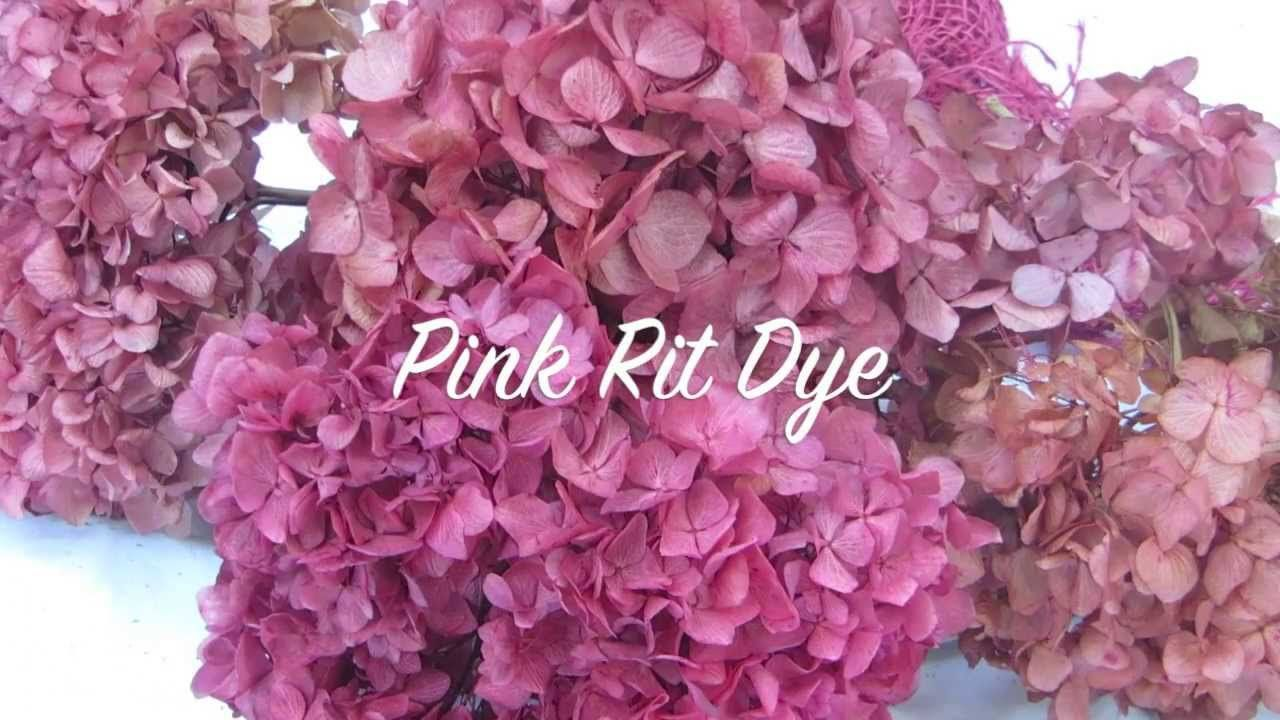 How To Dry Hydrangeas How To Color Hydrangeas Dried Hydrangeas Hydrangea Dried Flowers