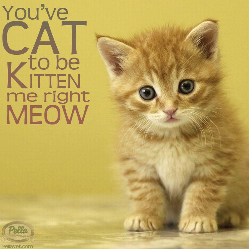You have cat to be kitten me right meow!