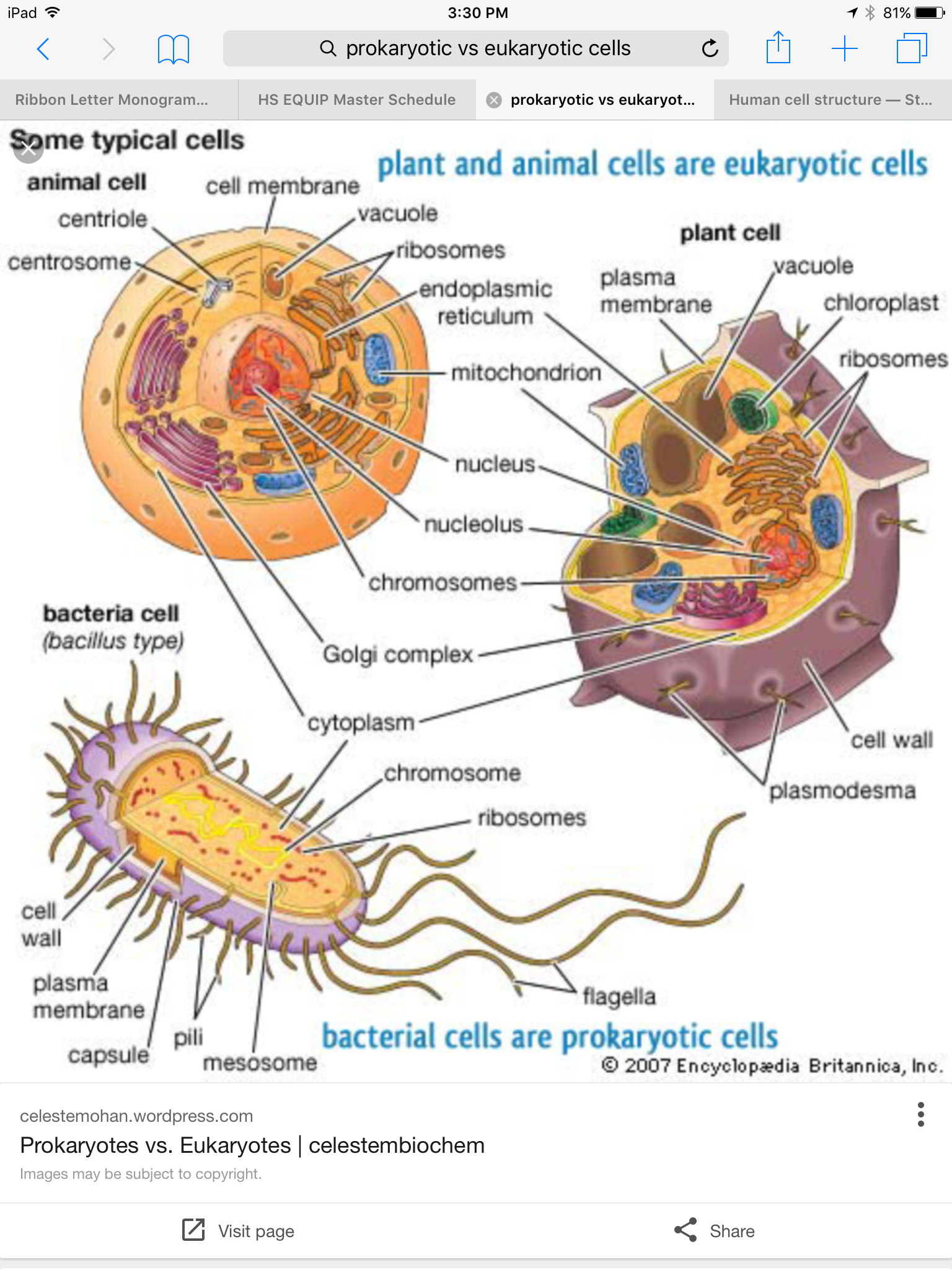 Pin by Jenny Simmons on Flash- biology | Plant and animal ...