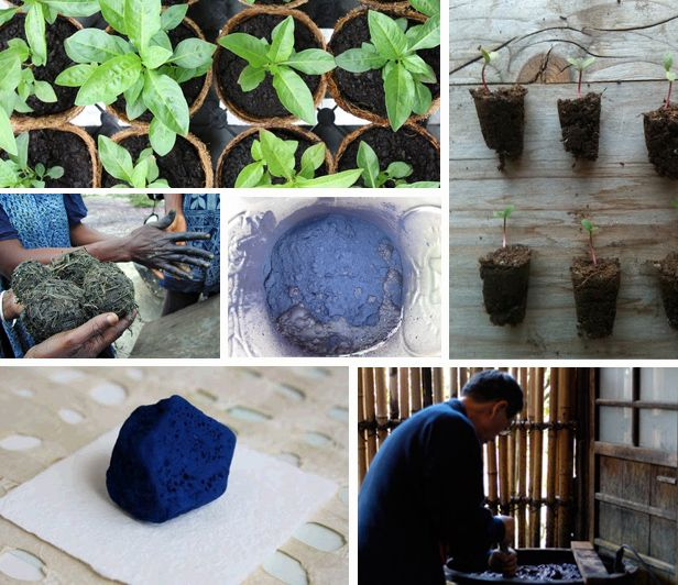 Image Gallery indigo plant and dye