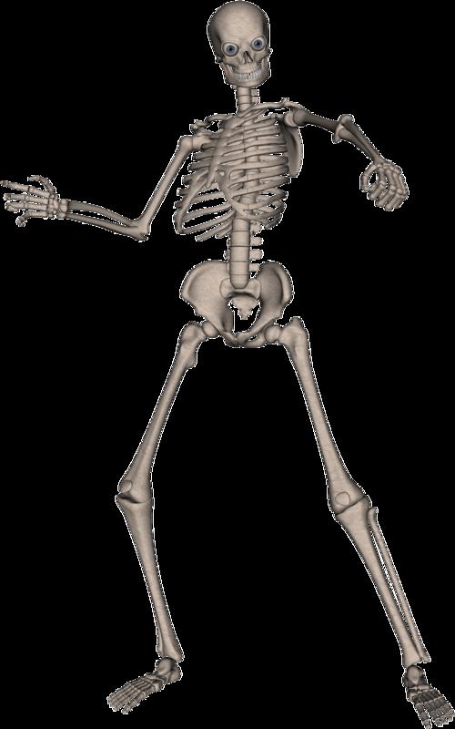 Skeleton Skull Png Image Skull Skeleton Png Photo