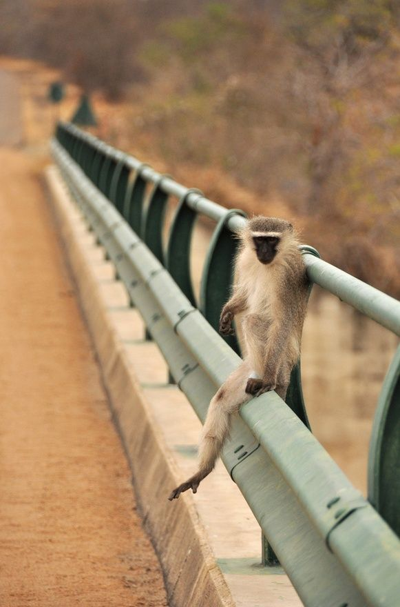 Check out Where to Stay's fabulous accommodation listings in KRUGER NATIONAL PARK - SABI SANDS  Click on link for more info. http://www.wheretostay.co.za/mp/knp/accommodation/kruger-national-park-sabi-sands.php