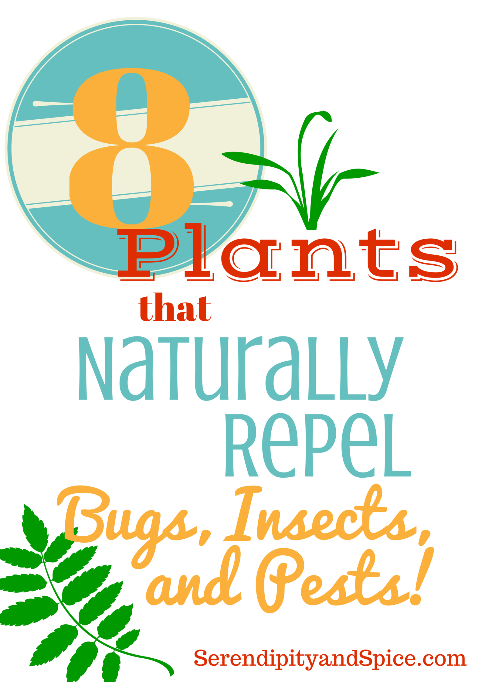 Don T Let Bugs And Insects Including Roaches Ants Wasps Bees Ruin Your Summer Fun Check Out These 8 Plants That Repel All Sorts Of Pests