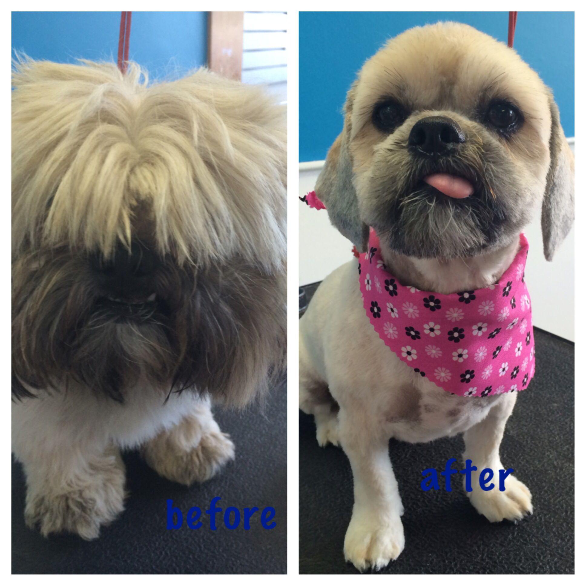 Pampered pets salon llc Pamper pets, Pets, Pet salon
