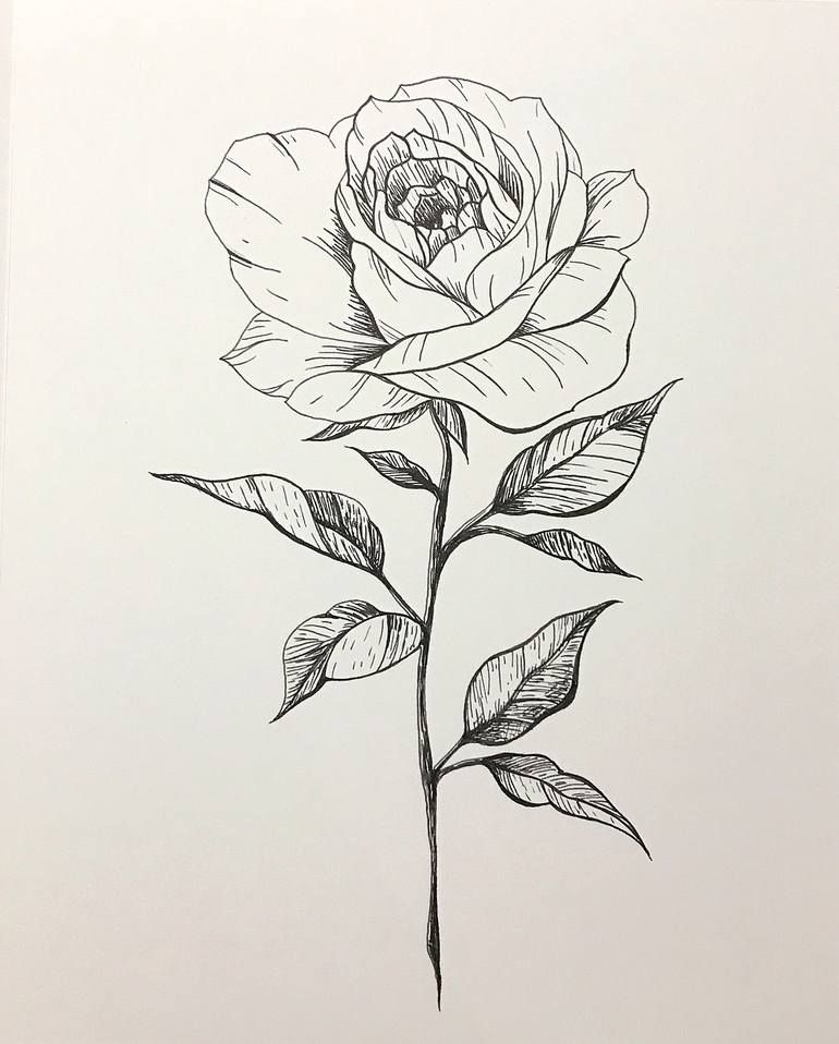 Rose Lines Drawing